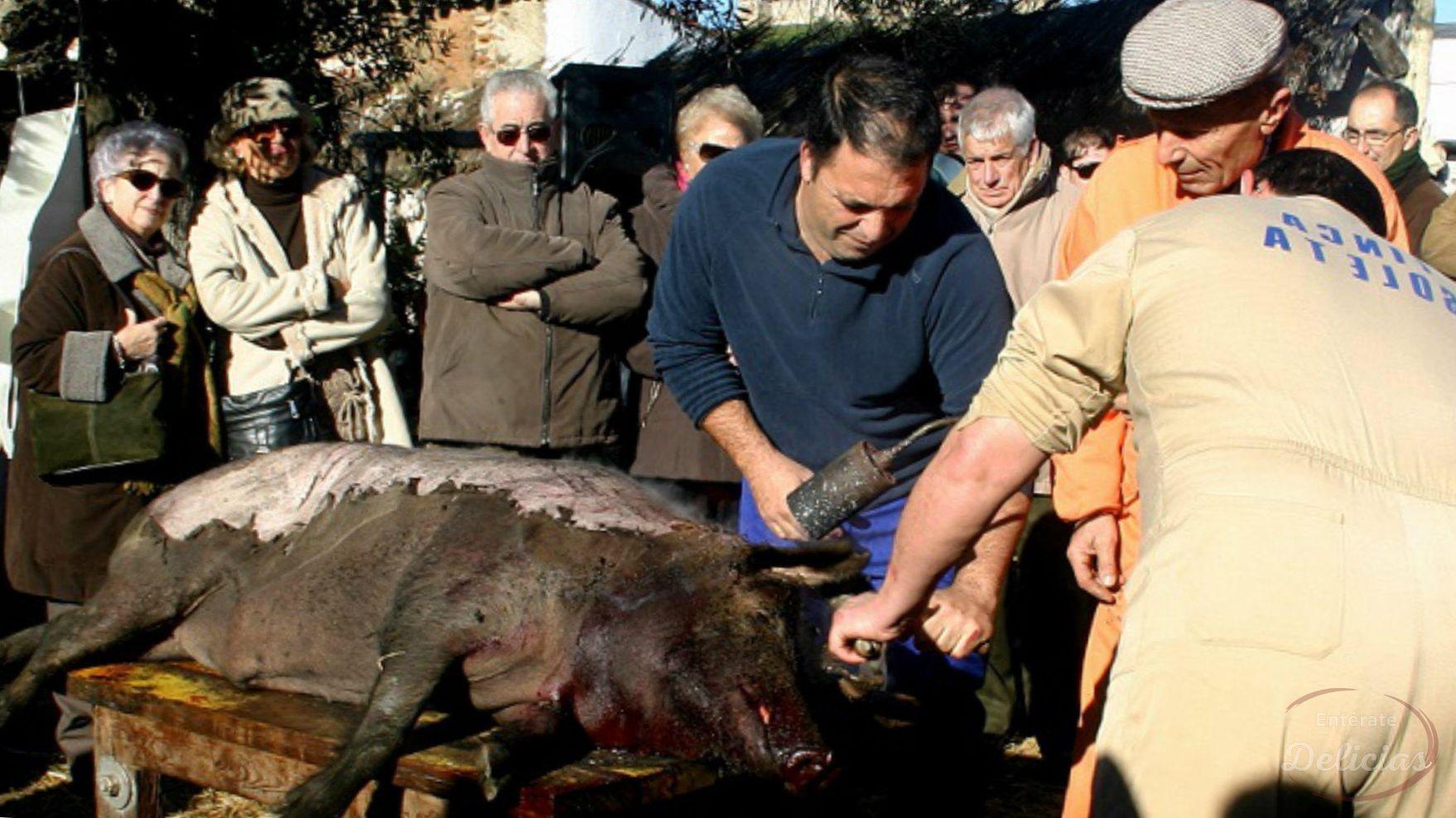 matanza del cerdo iberico, matanza del cerdo ibérico, matanza del cerdo, cuando es la matanza del cerdo, la matanza del cerdo, matanza de cerdos, cerdos de matanza, como hacer la matanza del cerdo, como hacer matanza de cerdo, como se hace la matanza del cerdo, que es la matanza en españa, fotos de matanzas de cerdos, como hacer una matanza, como matar un cerdo con cuchillo, como matar un cochino, matanza de puercos, cerdos para matanza, la matanza del cerdo en andalucia, matanza del cerdo en andalucia, videos de matanza de cerdos, como matan a los cerditos, como matan a los cerdos, como matan a los cochinos, cerdo muerto, como aturdir un cerdo, como despiezar un cerdo paso a paso, como hacer embutidos de matanza, como matan a los cerdos en el matadero, como matar un cerdo facil y rapido, cuanto cuesta un cerdo para matanza, gancho para cerdos, matando al chancho, matando cerdos, matanza comida española, matanza de cerdos en el rastro, matanza del cerdo en galicia, a chancho, accesorios para la matanza, banco para matar cerdos, cerdo acostado, cerdo adulto, cerdo con cabeza de pene, cerdo con cuchillo, cerdo de menos de un año, cerdo electrocutado, cerdo muerte, cerdo persona, cerdo wikipedia, cerdos andalucia, cerdos mil anuncios, cerdos milanuncios, como descuartizar un cochino, como se matan a los cerdos en el matadero, compra de cerdos en pie ecuador, comprar cerdos vivos, cuanto cuesta un cerdo de 100 kilos, cuantos cerdos matan al dia en españa, cuantos cerdos se matan en españa, decapitan cerdo, deguello de cerdos, el cerdo blog, embutidos del cerdo, factura de cerdo, familiares del cerdo, foto cerdo, la matanza del cerdo en asturias, le cortan la cabeza a un cerdo, matanza a maquila, matanza do porco, pene de cerdo, pene de cochino, porc wikipedia, precio de caldera de matanza, recetas de matanza tradicional, sacrificio porcino, se puede comer la carne de una cerda en celo, venta de cerdos para matanza,
